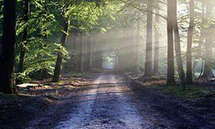 Meditationen zur Gesundheit von Geist und Körper